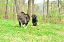 """Tiny """"greets"""" Gracie for the 1st time."""
